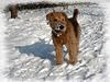 DOUCHKA, la chienne d'Annick [ON EXPLORE]