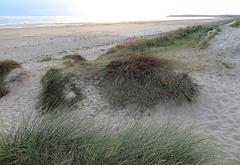 ... dunes ...