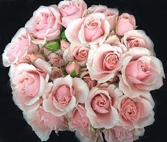 Circle of Blooms