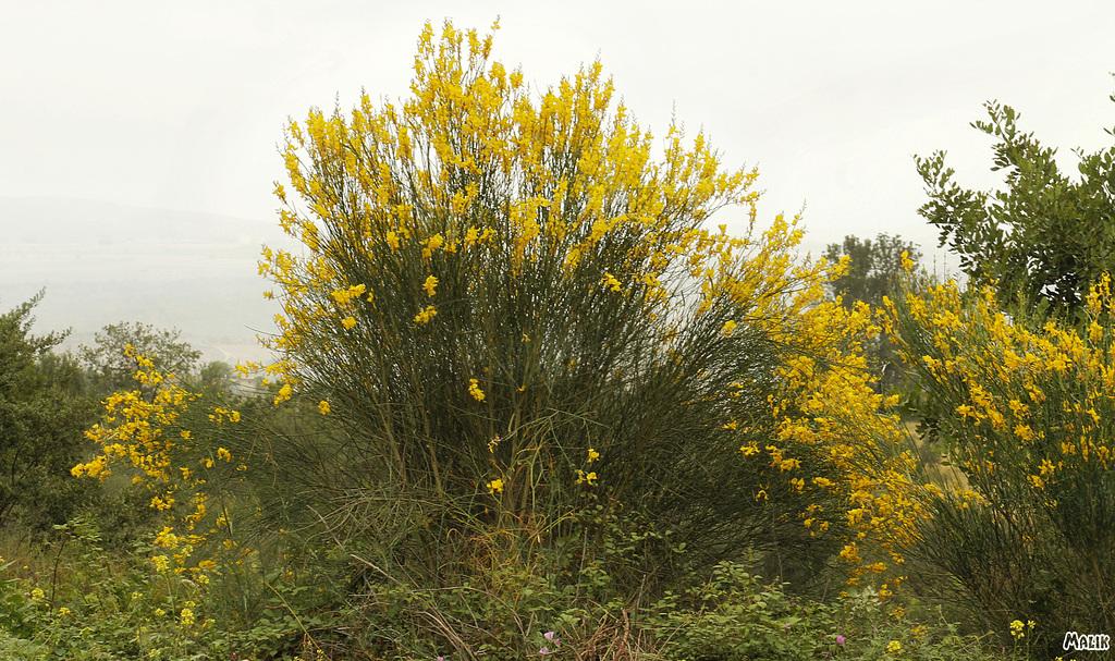 jaune fleur+10