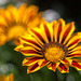 Victoria's Butchart Gardens, Part 3: Macro and More! (+10 insets)