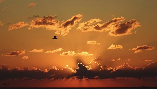 happy sunny Sunday sunrise