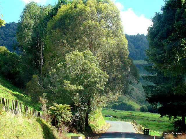 Traveling the Forgotten World Highway