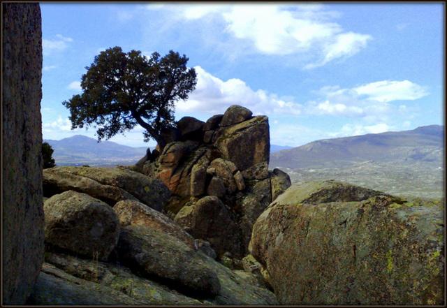 Iconic tree in La Sierra.