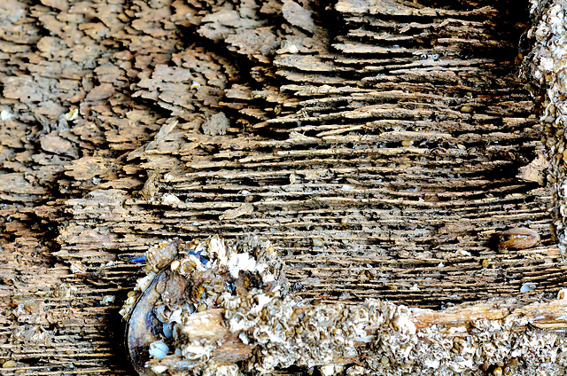 Rotting,Grained and Barnacled