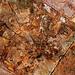 Timber Texture 2
