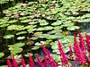 FR - Giverny - Garten von Claude Monet