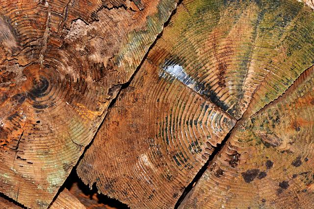 Timber Texture 1