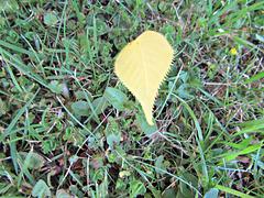 One Lone Leaf