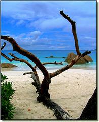 Seychelles : qui l'autore di tanta bellezza è : 'la natura'