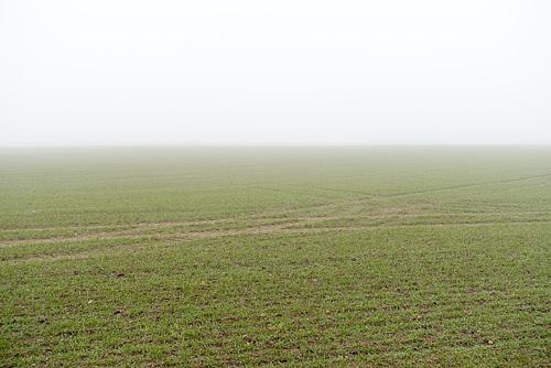 Auf Halskov zu im Nebel // -feld-02452-co-04-02-17