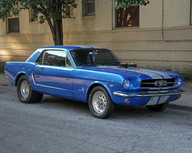 Killer Mustang