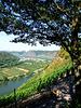 DE - Winningen - Moselle valley lookout