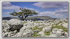 Another Tree from TOZ