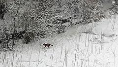 fox 18 march 2018