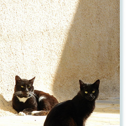 watchful cats