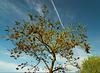 1 (54)...tree...baum