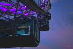 Purple Flyer