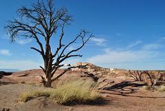 Lone Tree - Canyon de Chelly, AZ