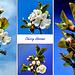 Collage Kirschblüten. ©UdoSm