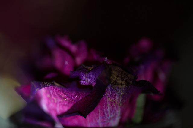 Purple descending into the darkness