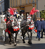 Krakow- Dalmatian Horses