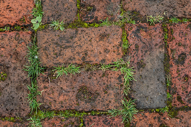 Wet Afternoon in March-Path (2)