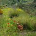 Estrelinha on the flowery path