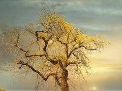 1 (44)...austria tree with sunrise
