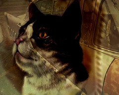 The cat dreams about a car, a Lincoln, to be exact