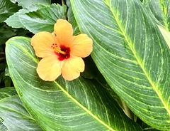 Blüte im Schmetterlingshaus