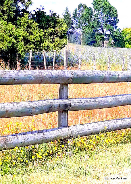 Well Fenced