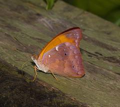 ButterflyIMG_3177-1