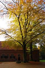 Autumn/Herbst/Herfst