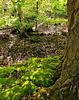 Moss & Mud