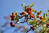 Es wird langsam Herbst - Autumn is slowly coming
