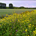 Bienenfreundlichere Agrarwirtschaft