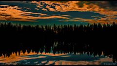 Wo sich Hund, Husky und Wolf 'gute Nacht' wünschen ... (© Buelipix)