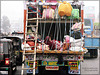 transport at Rajasthan