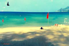 Un mattino sulla spiaggia. Buona Domenica a tutti voi!