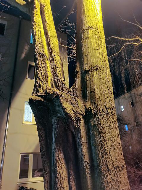 Baum - aus eins wird zwei