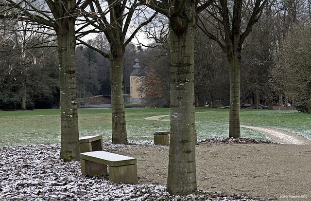 Junge Buchen im Schlosspark