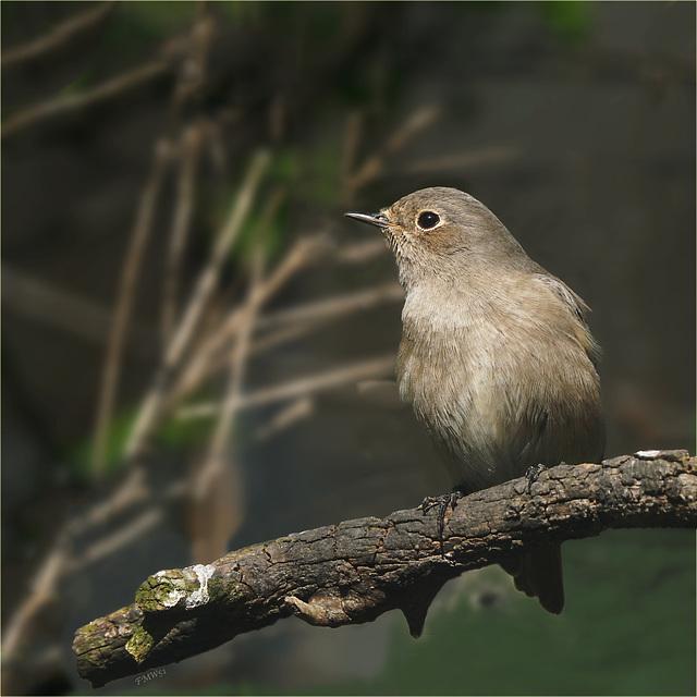 Ein Vögelein