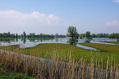 Overzicht over het moeras Schouwendijk