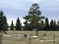 Sapins funéraires / Funerary Xmas trees