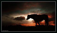 Horse Silouhette