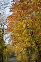 belles couleurs d'automne