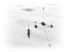 die Einsamkeit der Pflanzen im Winter (PiP)