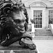 Lion at Kingston Lacy