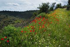 Penedos, Flowery path, HFF